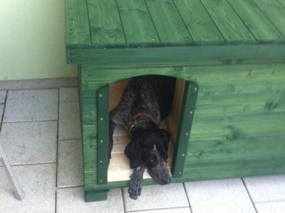 Psia búda odtieň jedľovo zelená