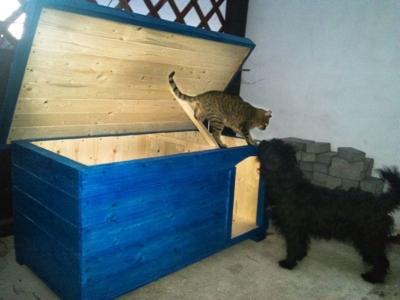 Psia búda so psom a mačkou