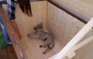 Zateplená psia búda-vnutro - vlčiak