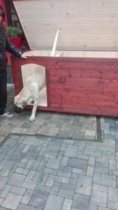 Zateplená psia búda