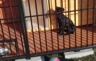 Zateplená psia búda - borovica